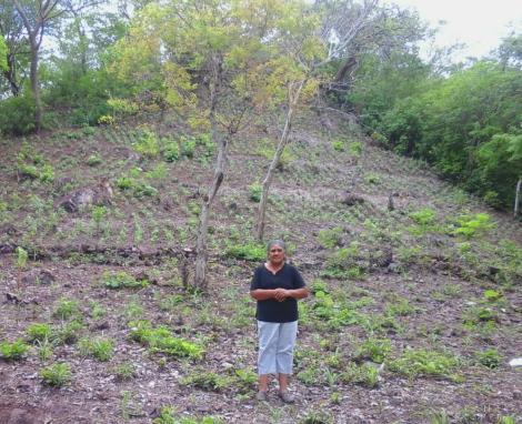 julita garden