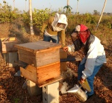 honey harvest feb 2016